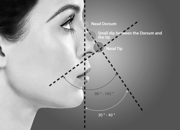Illustration showing the measurements and angles of the ideal nose